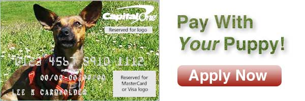 pay with your puppy personalized capital one credit card.jpg